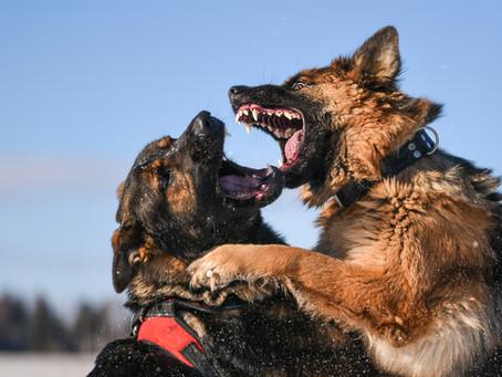 Dog Bite Injury and your Dog