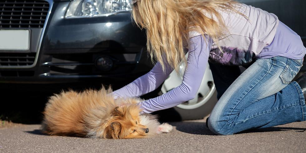 Fursafe Emergency Dog First Aid Seminar