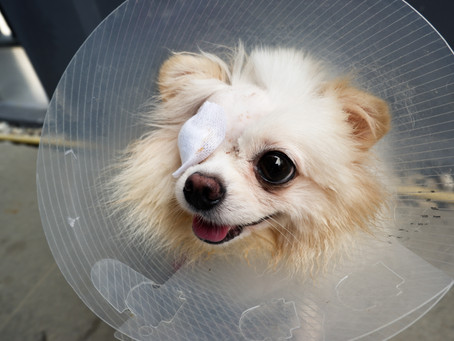 Eye Injuries and your Dog