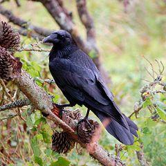 Holy Crow, It's Hallowe'en