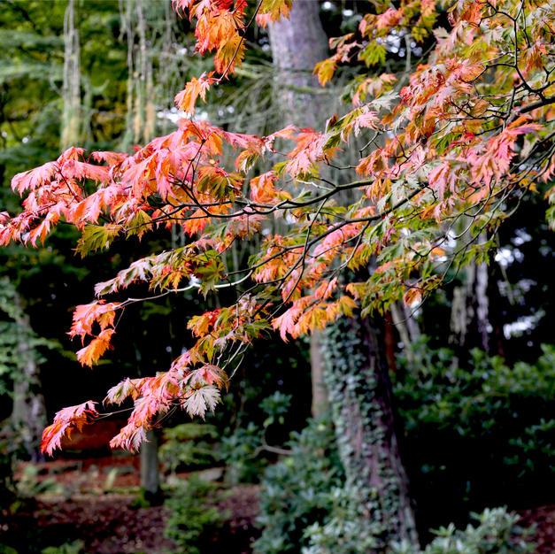 The leaves start turning.jpg