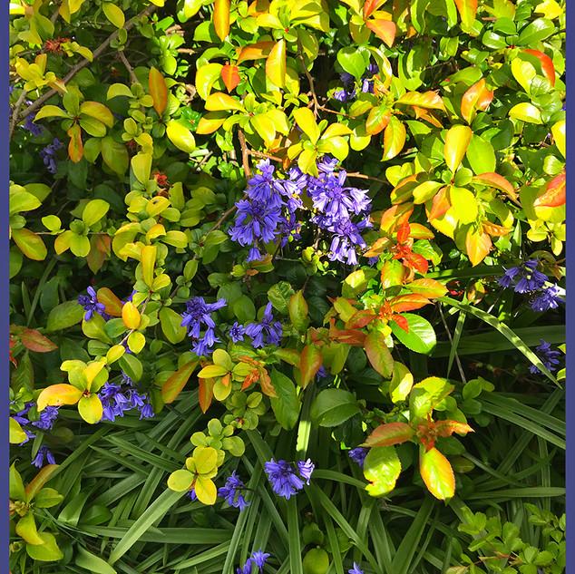8_PurpleandYellow.jpg