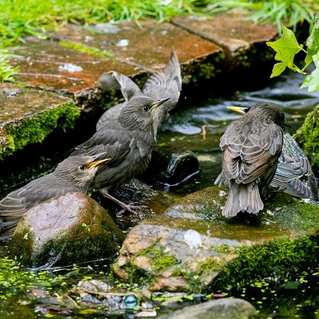 Communal Bathing.jpg