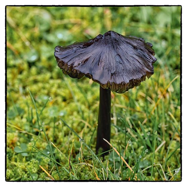 Wet Fungi.jpg