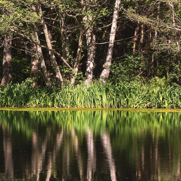 10_Reflections.jpg