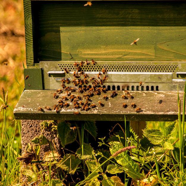 Bee thou my vision.jpg