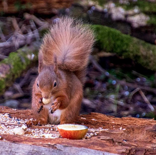 Squirrel in Classic Pose.jpg