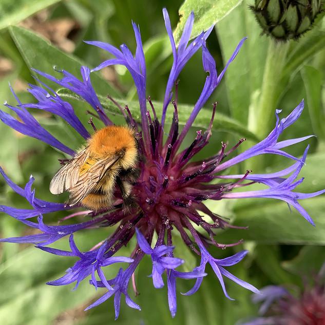 7__In the garden.jpg