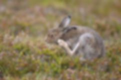 9-983 -Fauna A good scratch.JPG
