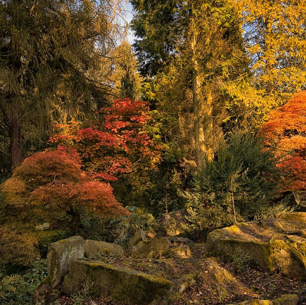 Stannylands Garden.jpg