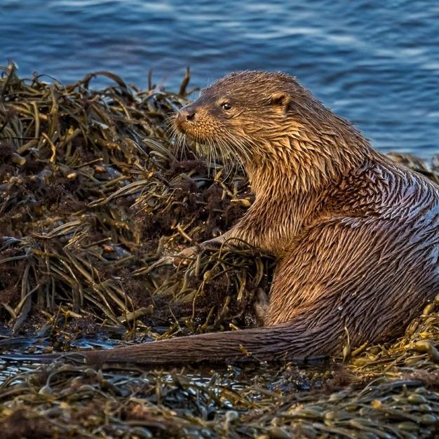 Amongst the Seaweed.jpg