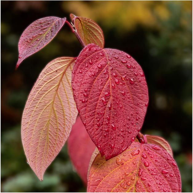 Autumn colours.jpg
