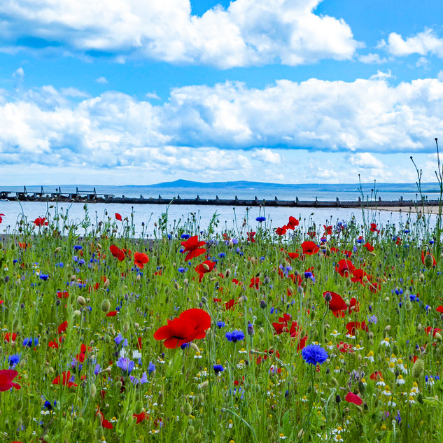 Wild Flowers by the Sea.jpg