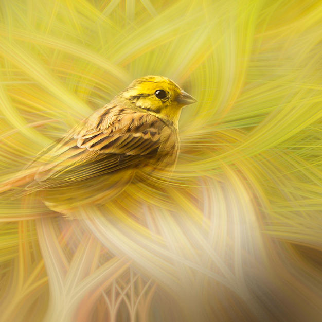 Yellow Hammer Twirl.jpg