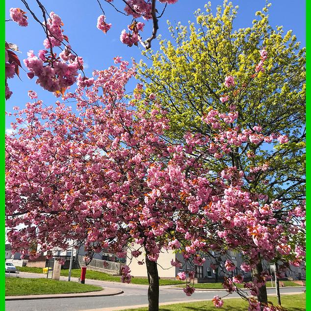 29_Blossom.jpg