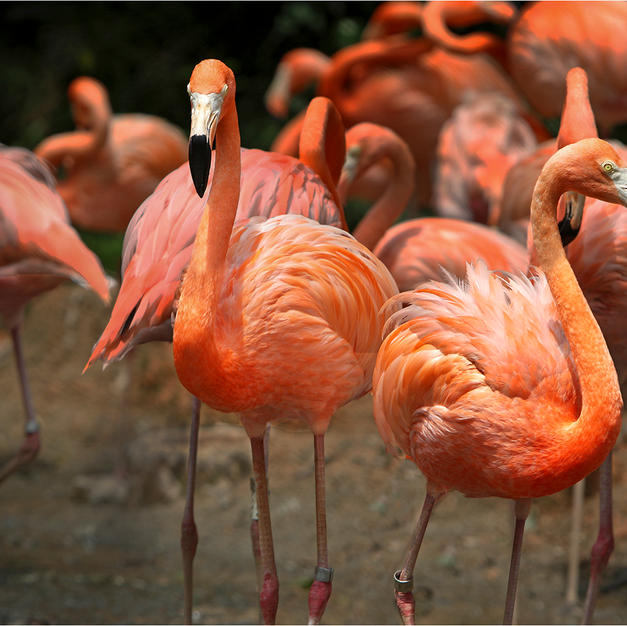 pretty flamingo.jpg