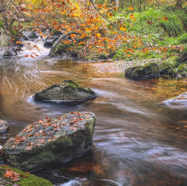 Cawdor Woods.jpg
