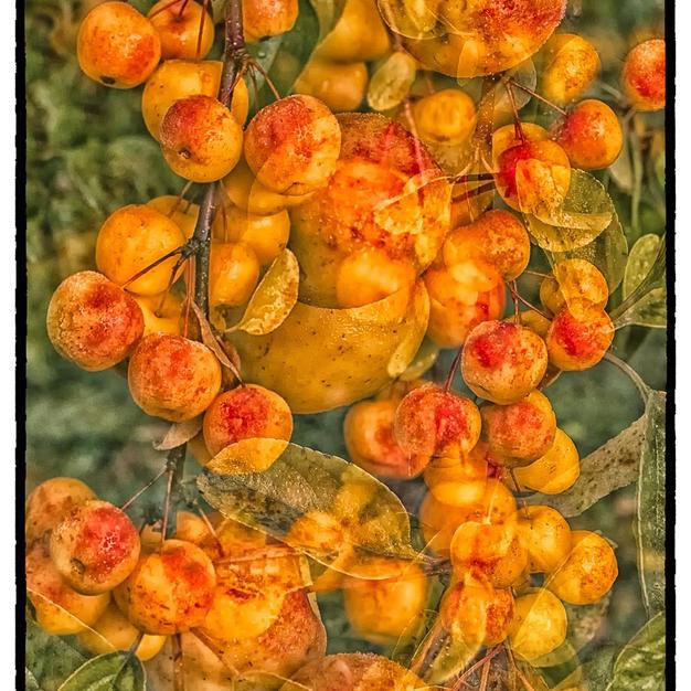 Crab Apples.jpg
