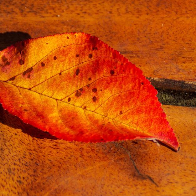 Cherry leaf.jpg