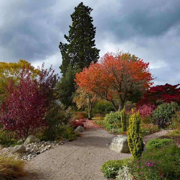 Autumn in Logie House gardens-1.jpg