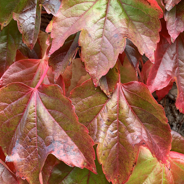 Autumn Leaves.jpg