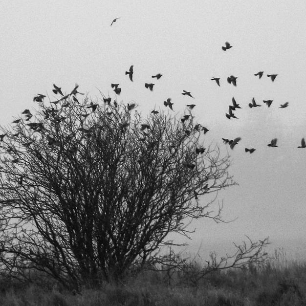 Taking Flight into Winter Mist.jpg