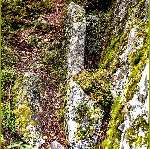 Lichen on Rocks.jpg