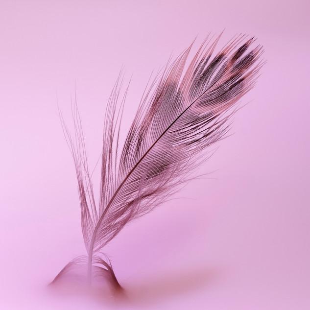 3_Feather.jpg