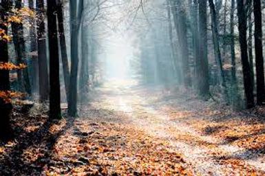 Trees pathway.jpeg