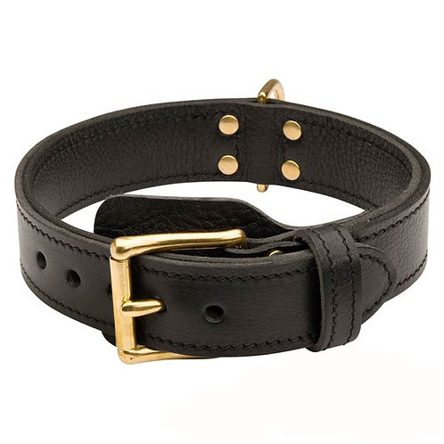 """1 3/4""""   2Ply Leather Dog collar"""