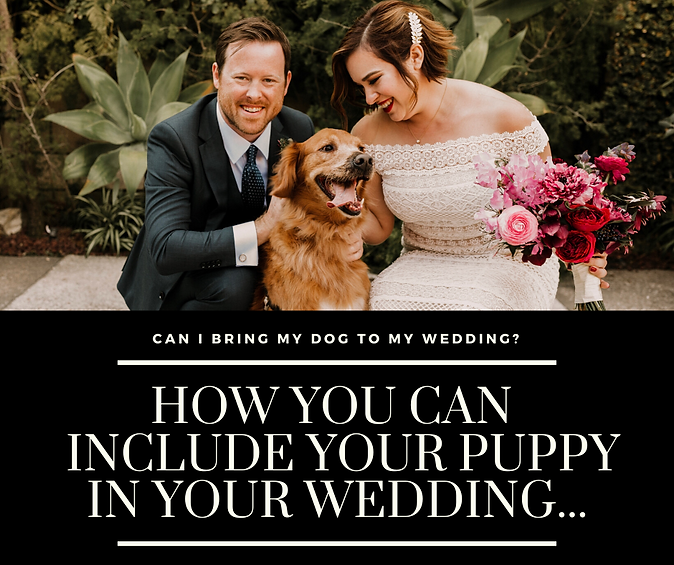 How You Can Include Your Dog In Your Wed