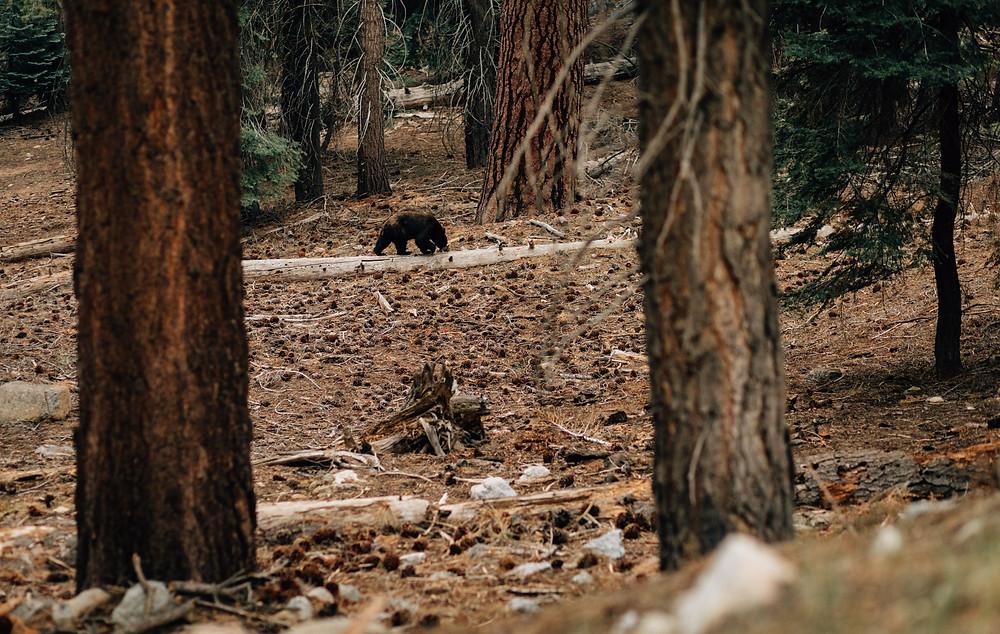 We saw a bear!