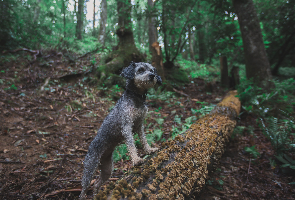 Dogs in the wild portraits
