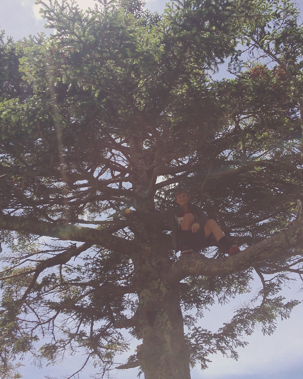 In another tree