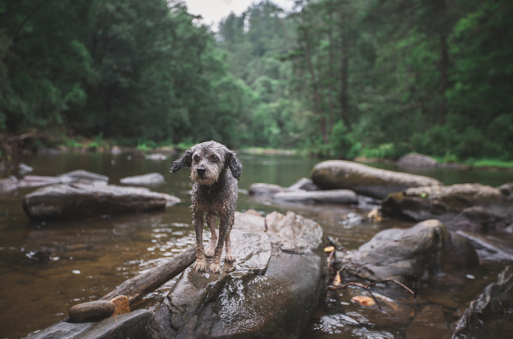 Chattooga River camping with dogs