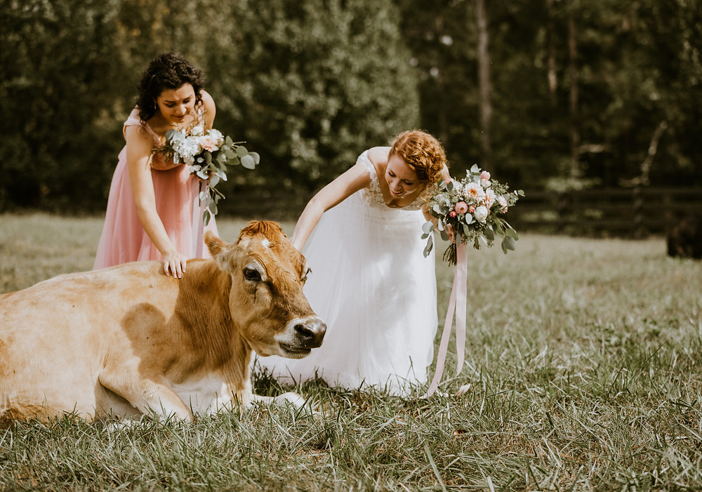 bride with cow