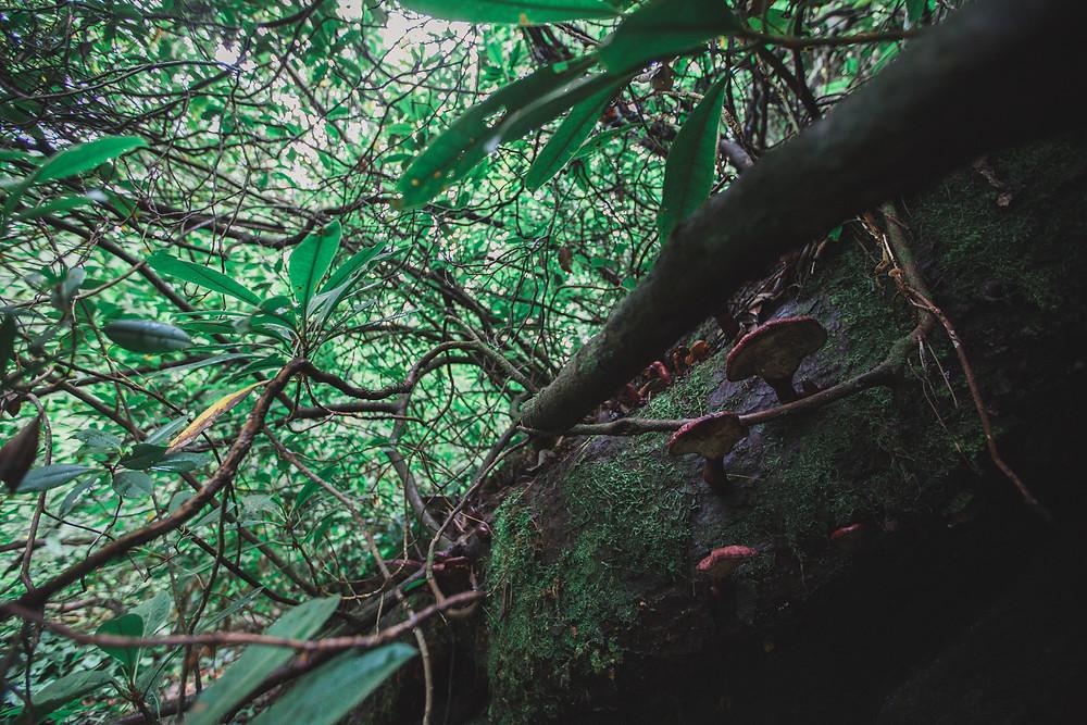 Mushroom on trees