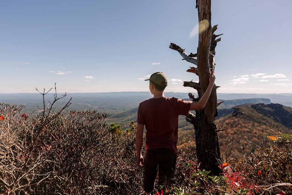 Dead tree on top of mountain