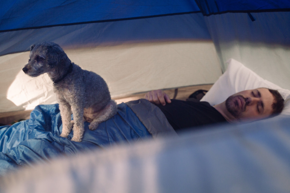 Camping with dogs in tent
