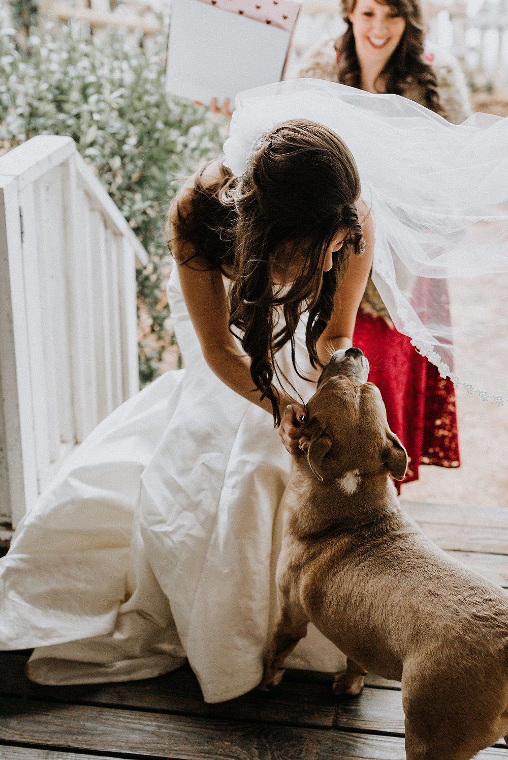 Dogs on wedding day