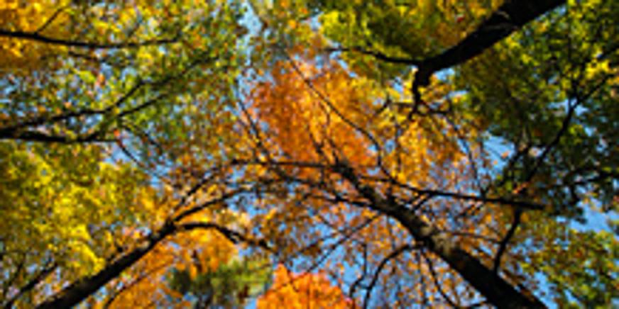 Fall Flight Festival - Nov. 17