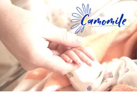 B&T тест Camomile. Диагностика Первичных Иммунодефицитов