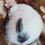 Thumbnail: Mika