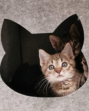 Kitten_Haus.jpeg