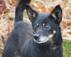 Alwin – Kleiner Hund mit Herzhusten