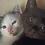 Thumbnail: Remi & Kalwi