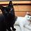 Thumbnail: Janosch & Ernie
