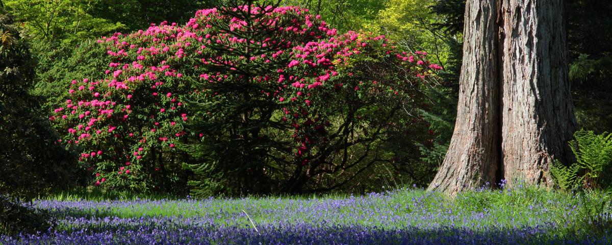 Beautiful and enchanting Armadale Gardens