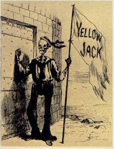 Yellowjack.jpg