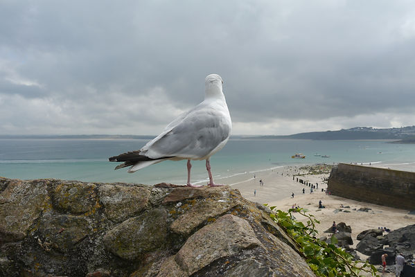 Bamaluz beach, secluded beach, St Ives museum, dog friendly, Wheal dream, secret beach, rock pools, crabs, mussels, crabbing,